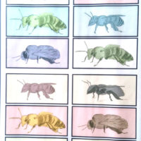 Colored Bees One - Panel 1 (black) - Original colored Photomontage based on original drawings of live bees - (40 cm x 60 cm)